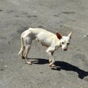 Cuba prevé aprobar este año política de bienestar animal