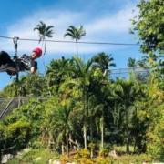 Canopy: uno de los mayores atractivos del Jardín Botánico Nacional