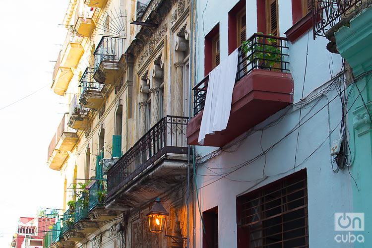 Havana orphaned