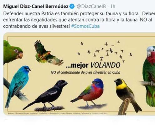 Presidente de Cuba llama a enfrentar ilegalidades hacia flora y fauna