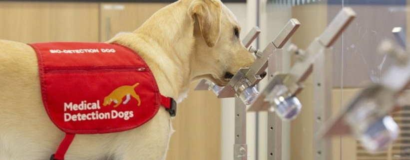 ¿Podrían perros entrenados detectar el nuevo coronavirus?