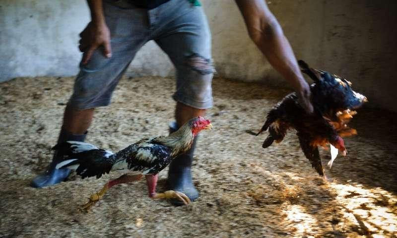 Les amoureux des animaux à Cuba espèrent qu'une nouvelle loi