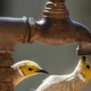 Rotura causa afectación en servicio de agua en municipios del centro de la ciudad