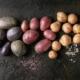 Potatoes USA sent seed potatoes to Cuba for trials