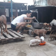 Animal Welfare decree to collect criteria of the population, according to government