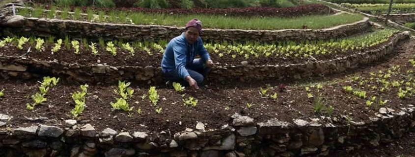 Finca Marta Explores Sustainability by Hand
