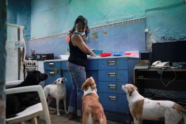Cuba approuve la loi sur le bien-être animal après la pression de la société civile