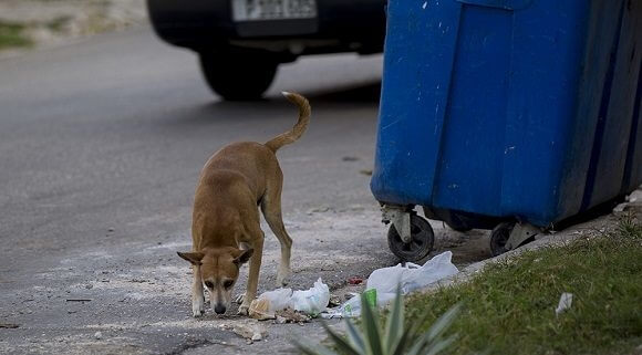 Animal Welfare Law in Cuba proposes fines of up to 7 thousand pesos to those who violate an animal