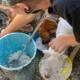 Animalistas alertan sobre intención de cobrar impuestos a rescatadores