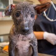 Publica Cuba en su Gaceta Oficial Decreto-ley de Bienestar Animal