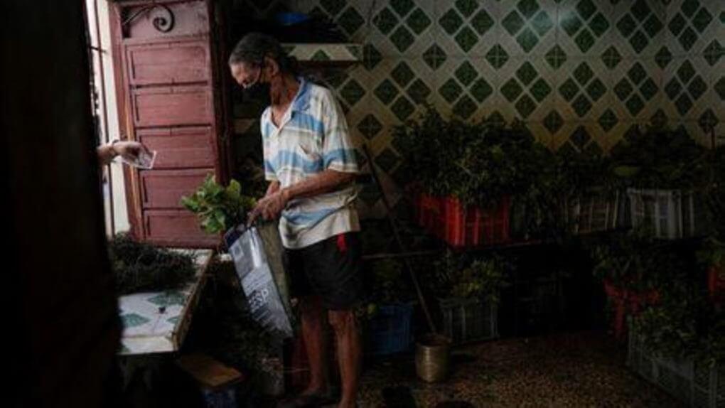 Cubans turn to herbal remedies, barter amid medicine scarcity