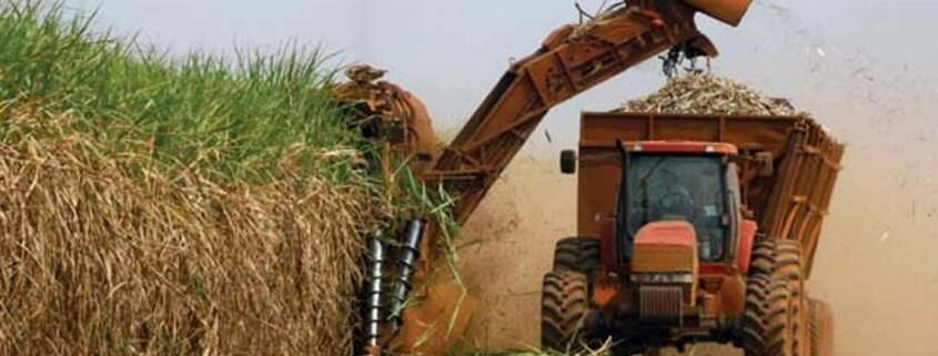 Coronavirus slashes Cuba sugar harvest, piles on economic woes