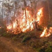El incendio forestal del Parque Alejandro de Humboldt dejó menos daños
