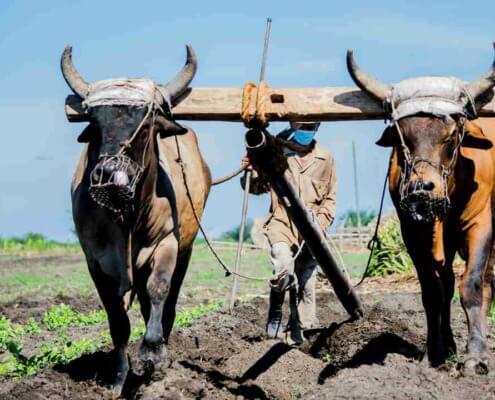 Banca de Cuba ofrece créditos a productores agropecuarios