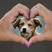 Cuba ratifies decree on animal welfare
