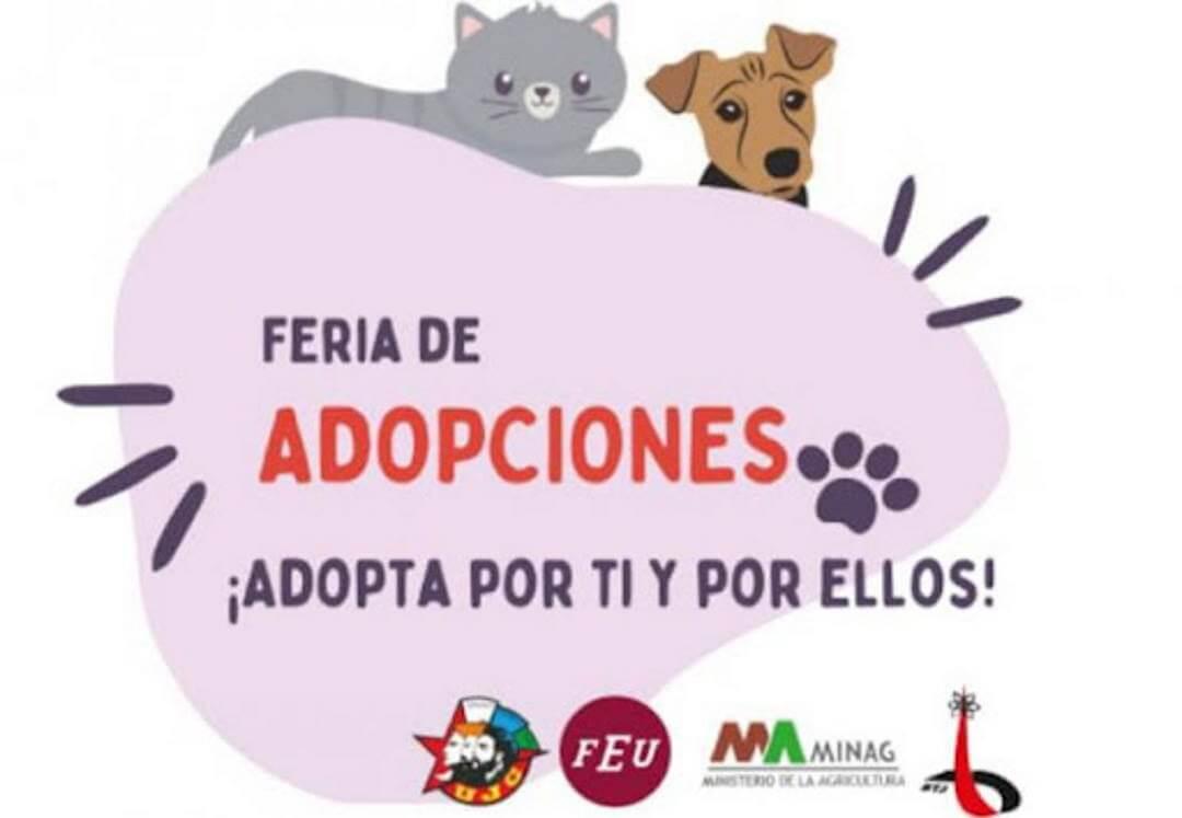 Feria de adopciones en Parque Almendares